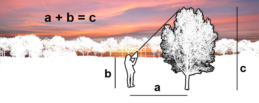De hoogte van een boom bepalen doe je zo - Hoe een boom te verlichten ...